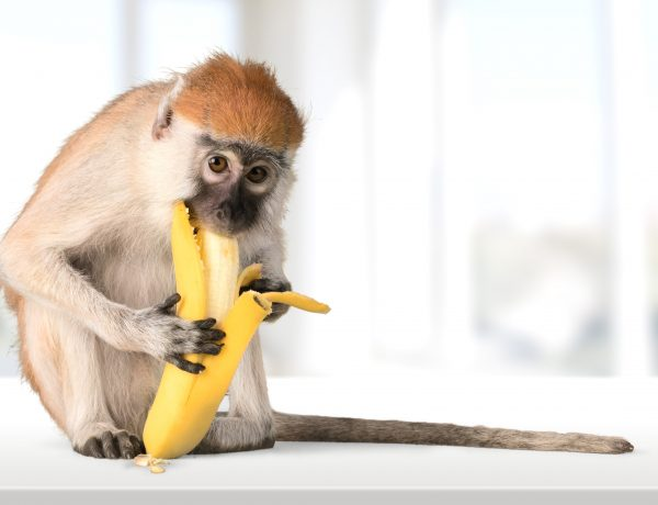 Whose Monkey At Forty Five