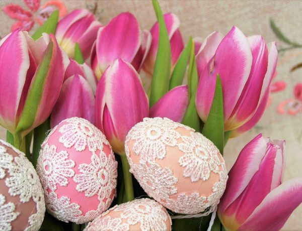 tulips-3113969_1280